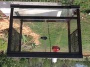 Reptile/ frog glass terrarium